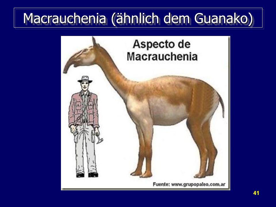 41 Macrauchenia (ähnlich dem Guanako)