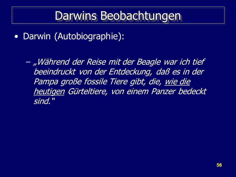 """56 Darwins Beobachtungen Darwin (Autobiographie): –""""Während der Reise mit der Beagle war ich tief beeindruckt von der Entdeckung, daß es in der Pampa große fossile Tiere gibt, die, wie die heutigen Gürteltiere, von einem Panzer bedeckt sind."""