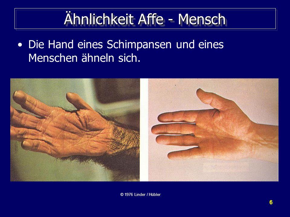 6 Ähnlichkeit Affe - Mensch Die Hand eines Schimpansen und eines Menschen ähneln sich.
