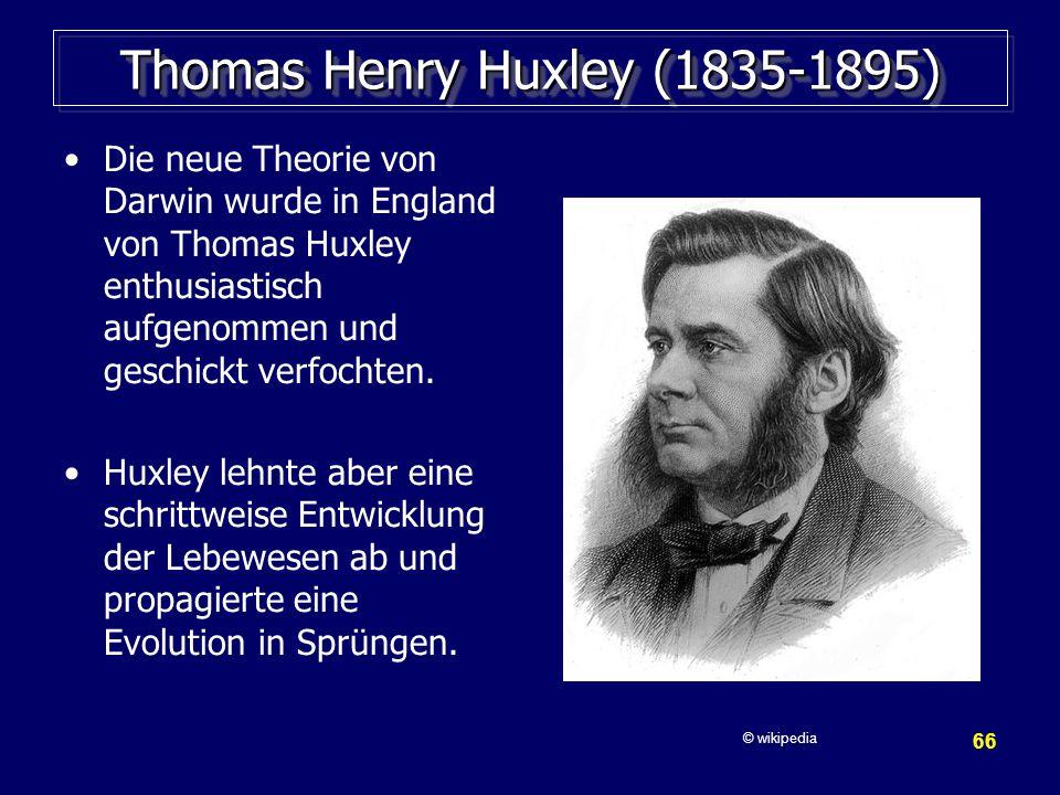 66 Thomas Henry Huxley (1835-1895) Die neue Theorie von Darwin wurde in England von Thomas Huxley enthusiastisch aufgenommen und geschickt verfochten.