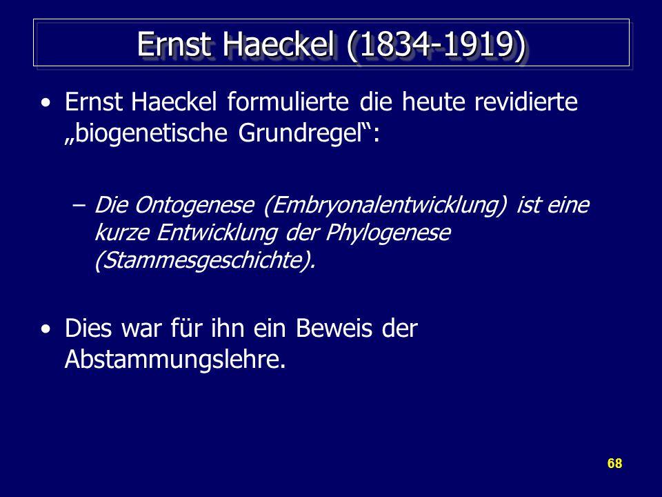 """68 Ernst Haeckel (1834-1919) Ernst Haeckel formulierte die heute revidierte """"biogenetische Grundregel : –Die Ontogenese (Embryonalentwicklung) ist eine kurze Entwicklung der Phylogenese (Stammesgeschichte)."""