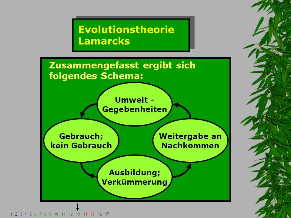 Evolutionstheorie Lamarcks Zusammengefasst ergibt sich folgendes Schema: Umwelt - Gegebenheiten Gebrauch; kein Gebrauch Weitergabe an Nachkommen Ausbi