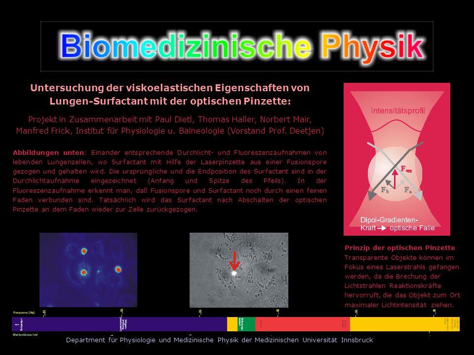 Department für Physiologie und Medizinische Physik der Medizinischen Universität Innsbruck Prinzip der optischen Pinzette Transparente Objekte können