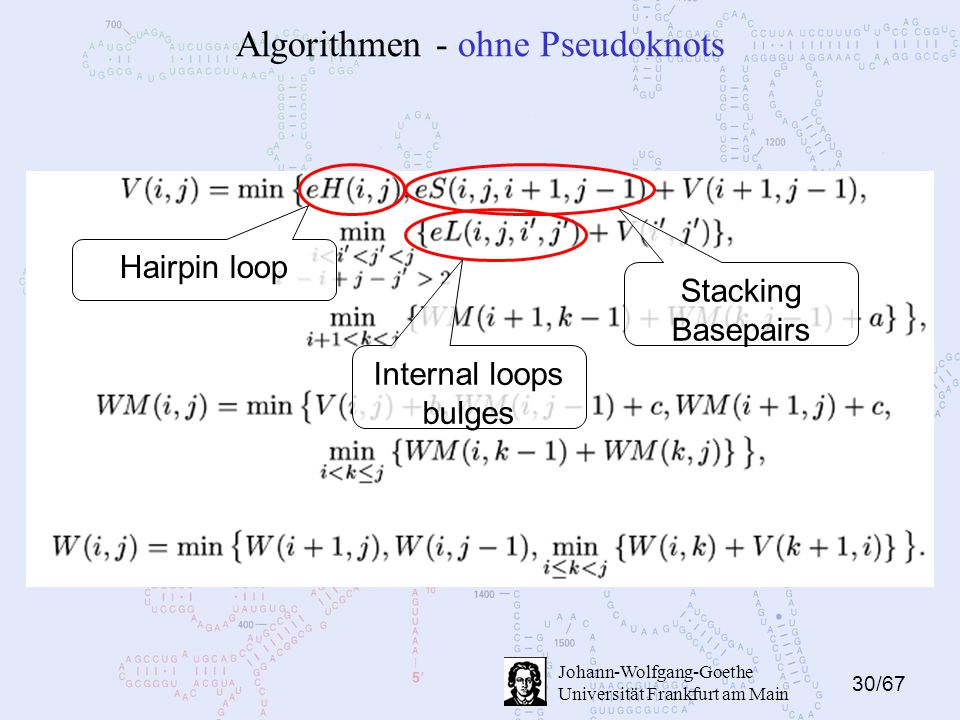 30/67 Johann-Wolfgang-Goethe Universität Frankfurt am Main Algorithmen - ohne Pseudoknots Hairpin loop Stacking Basepairs Internal loops bulges