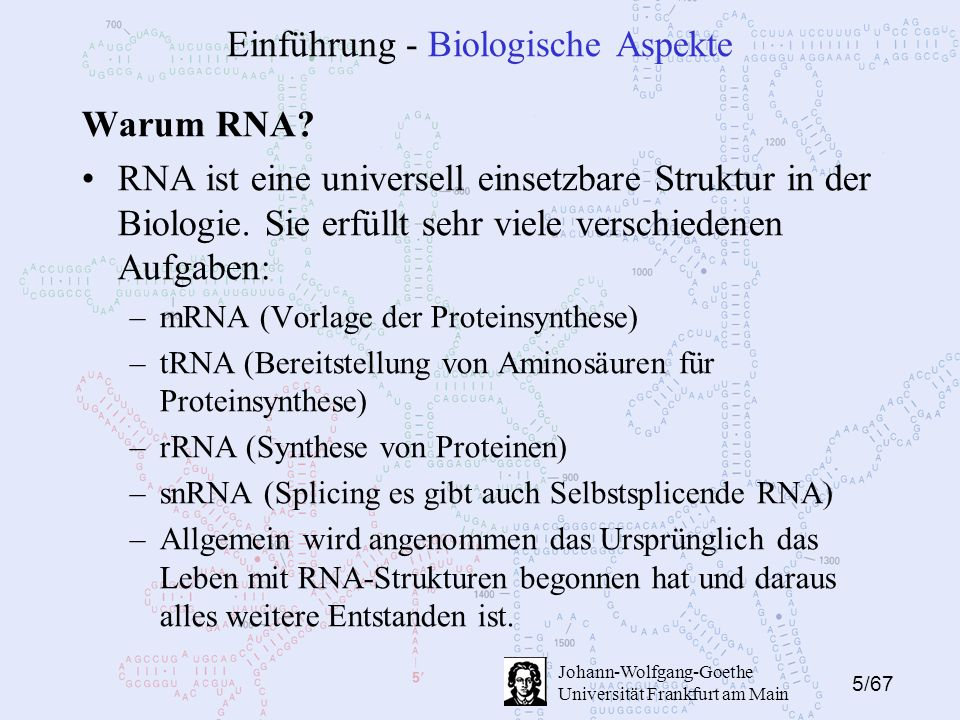 5/67 Johann-Wolfgang-Goethe Universität Frankfurt am Main Einführung - Biologische Aspekte Warum RNA? RNA ist eine universell einsetzbare Struktur in