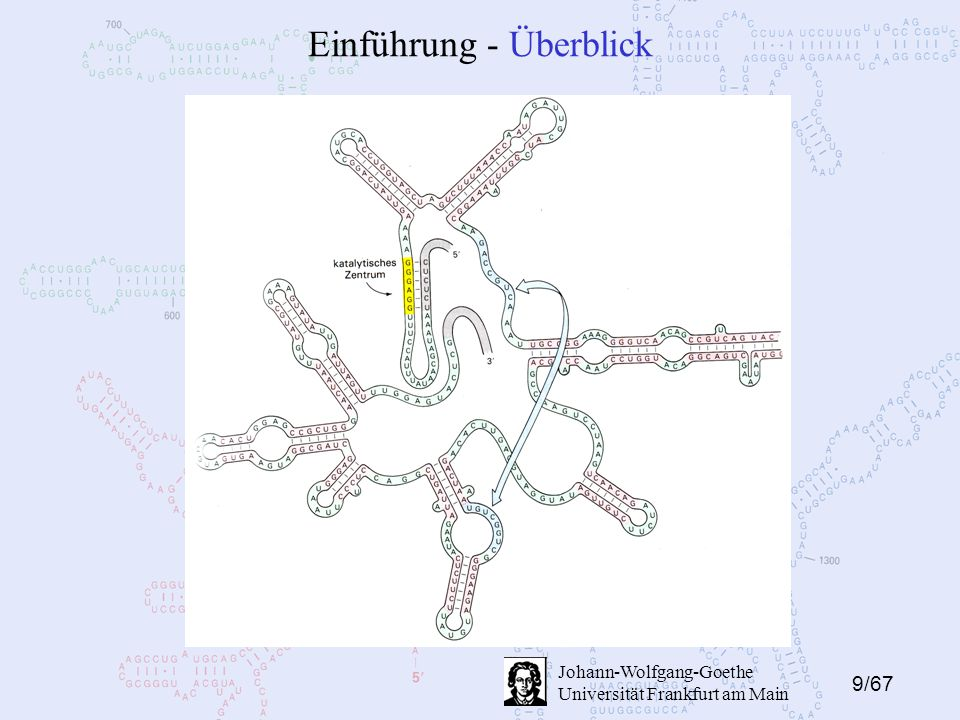 20/67 Johann-Wolfgang-Goethe Universität Frankfurt am Main Algorithmen - ohne Pseudoknots Folgerung: Es muss sich mindestens noch ein SP unter L befinden.