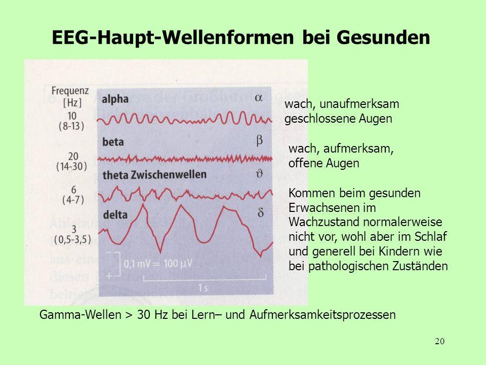 20 EEG-Haupt-Wellenformen bei Gesunden wach, unaufmerksam geschlossene Augen wach, aufmerksam, offene Augen Gamma-Wellen > 30 Hz bei Lern– und Aufmerk
