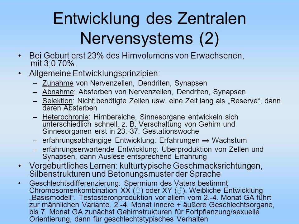 Entwicklung des Zentralen Nervensystems (2) Bei Geburt erst 23% des Hirnvolumens von Erwachsenen, mit 3;0 70%.