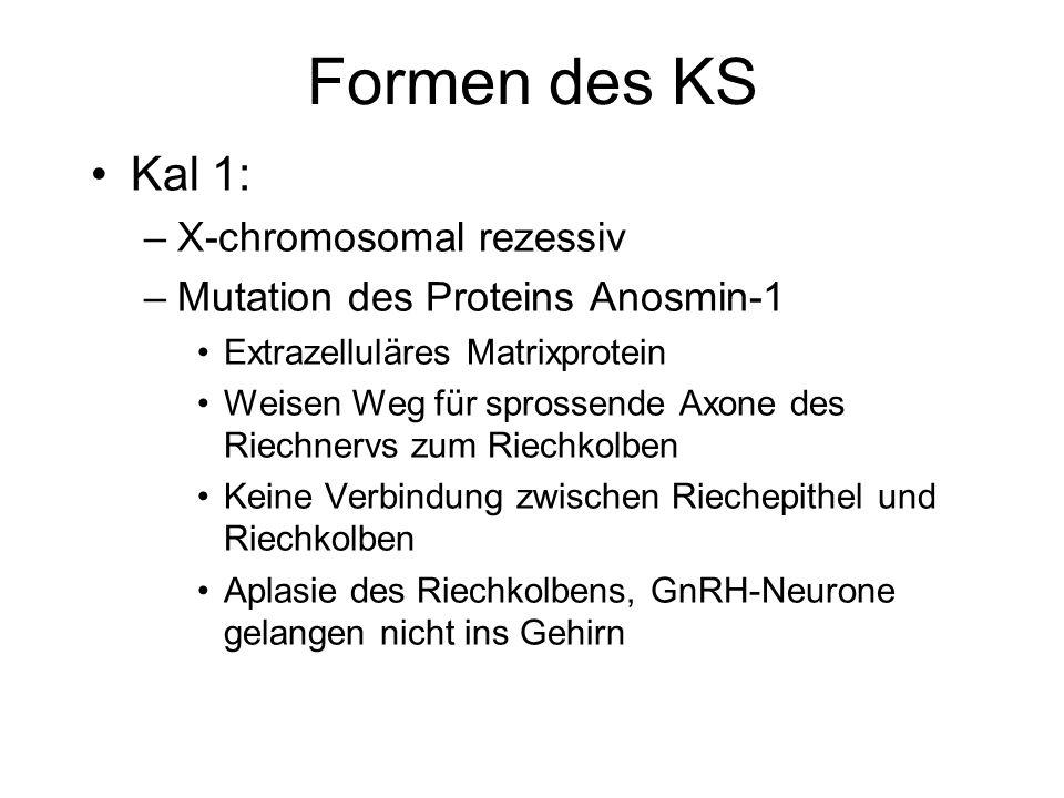 Formen des KS Kal 1: –X-chromosomal rezessiv –Mutation des Proteins Anosmin-1 Extrazelluläres Matrixprotein Weisen Weg für sprossende Axone des Riechn