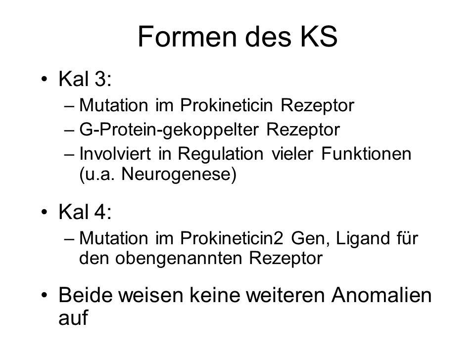 Formen des KS Kal 3: –Mutation im Prokineticin Rezeptor –G-Protein-gekoppelter Rezeptor –Involviert in Regulation vieler Funktionen (u.a. Neurogenese)