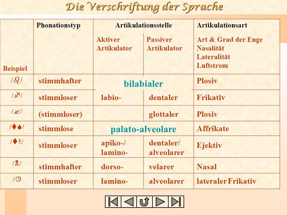 Die Verschriftung der Sprache Artikulatoren Zusg. Terminus Beispiele (labial, labial) bi-labial / p,b,m /: pin, bin, mine (labial, dental) labio-denta