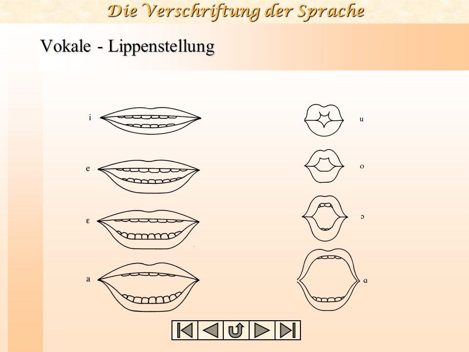 Die Verschriftung der Sprache Vokalparameter Das traditionelle System der Vokalklassifikation basiert auf drei Parametern: hoch – niedrig vorder – hin