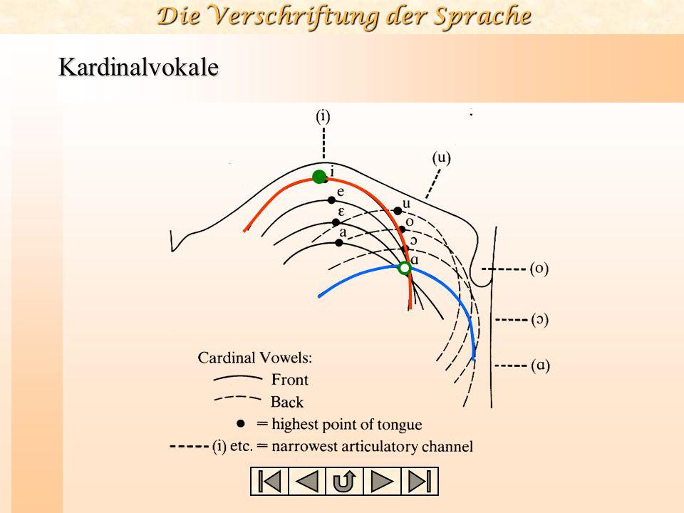 Vokale und Konsonanten Die acht Kardinalvokale, die als Bezugspunkte für die Beschreibung aller anderen Vokale gedacht sind, sind so konzipiert, daß s