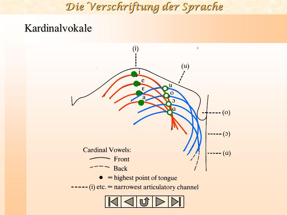 Vokale und Konsonanten Die ersten fünf Kardinalvokale bilden somit eine Skala aus scheinbar äquidistanten Vokallauten, die vom vom höchsten und vorder