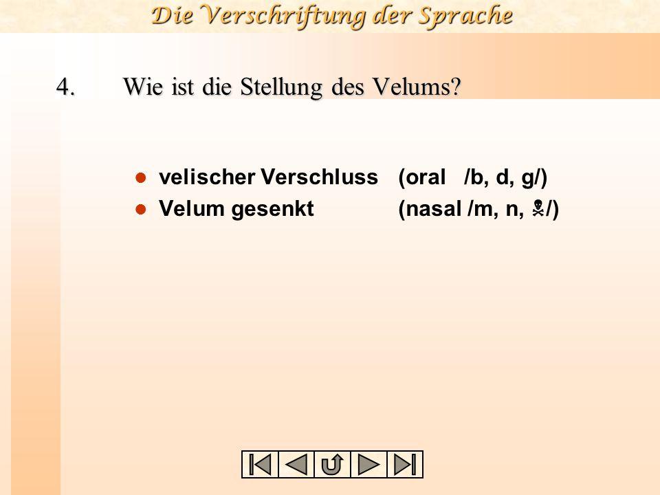 Die Verschriftung der Sprache 3. Wie ist die Stellung der Glottis? Atemstellung (stimmlos) Stimmstellung (stimmhaft) Flüsterstellung (geflüstert) Murm