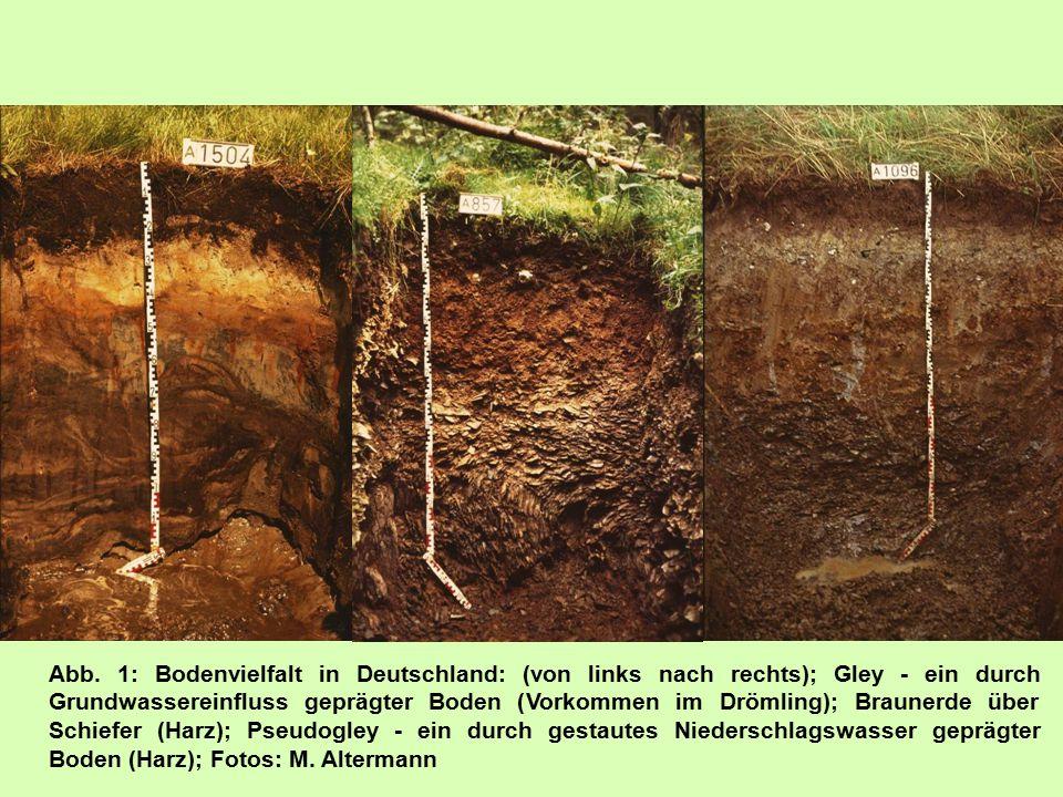 Abb. 1: Bodenvielfalt in Deutschland: (von links nach rechts); Gley - ein durch Grundwassereinfluss geprägter Boden (Vorkommen im Drömling); Braunerde