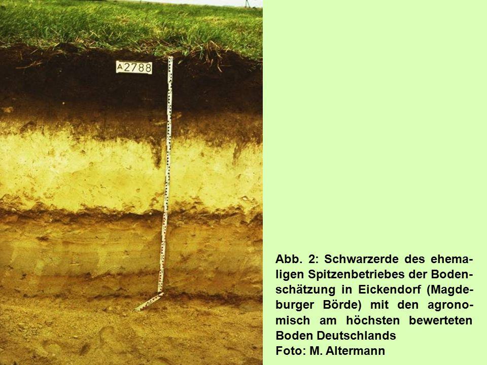 Abb. 2: Schwarzerde des ehema- ligen Spitzenbetriebes der Boden- schätzung in Eickendorf (Magde- burger Börde) mit den agrono- misch am höchsten bewer