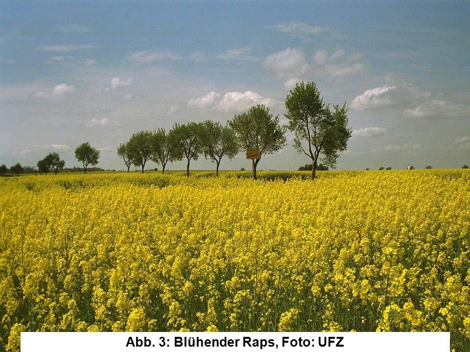Abb. 3: Blühender Raps, Foto: UFZ
