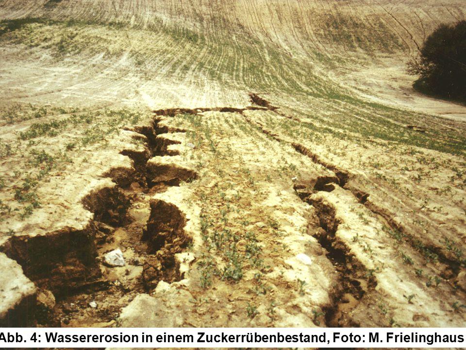 Abb. 4: Wassererosion in einem Zuckerrübenbestand, Foto: M. Frielinghaus