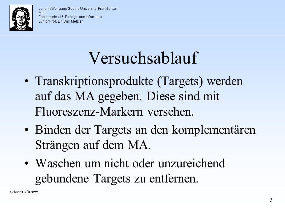 Johann Wolfgang Goethe Universität Frankfurt am Main Fachbereich 15: Biologie und Informatik Junior Prof. Dr. Dirk Metzler Sebastian Bremm 3 Versuchsa