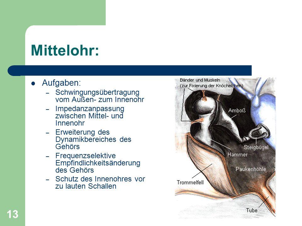 13 Mittelohr: Aufgaben: – Schwingungsübertragung vom Außen- zum Innenohr – Impedanzanpassung zwischen Mittel- und Innenohr – Erweiterung des Dynamikbe
