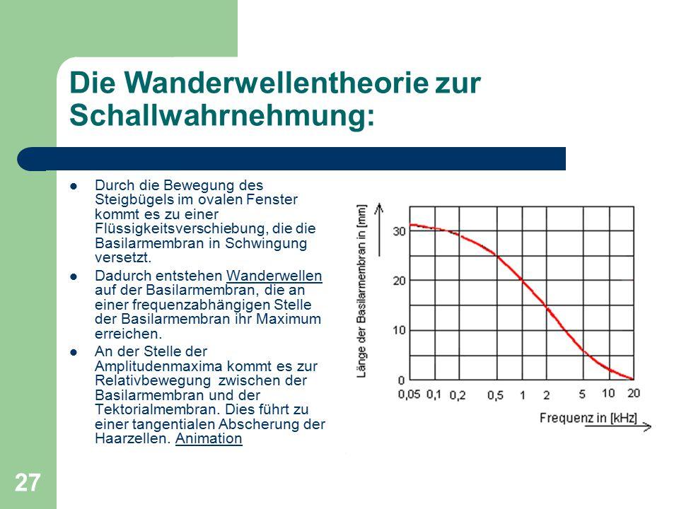 27 Die Wanderwellentheorie zur Schallwahrnehmung: Durch die Bewegung des Steigbügels im ovalen Fenster kommt es zu einer Flüssigkeitsverschiebung, die