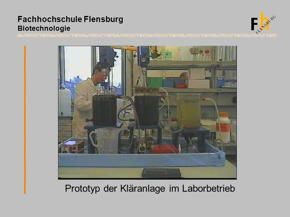 Fachhochschule Flensburg Biotechnologie Prototyp der Kläranlage im Laborbetrieb
