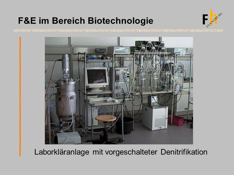 Laborkläranlage mit vorgeschalteter Denitrifikation F&E im Bereich Biotechnologie