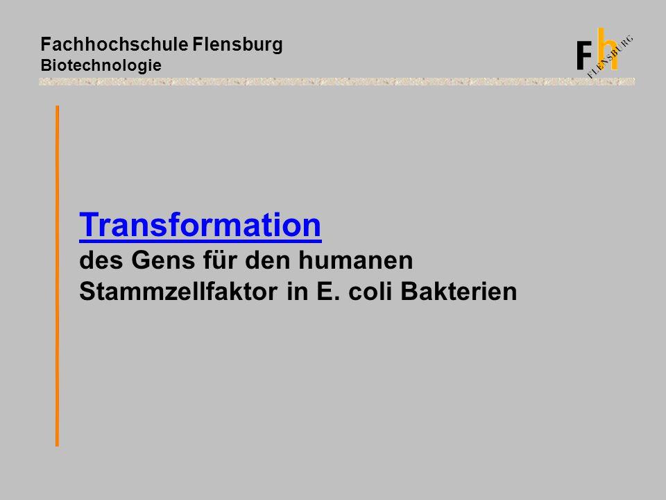 Fachhochschule Flensburg Biotechnologie Transformation des Gens für den humanen Stammzellfaktor in E. coli Bakterien