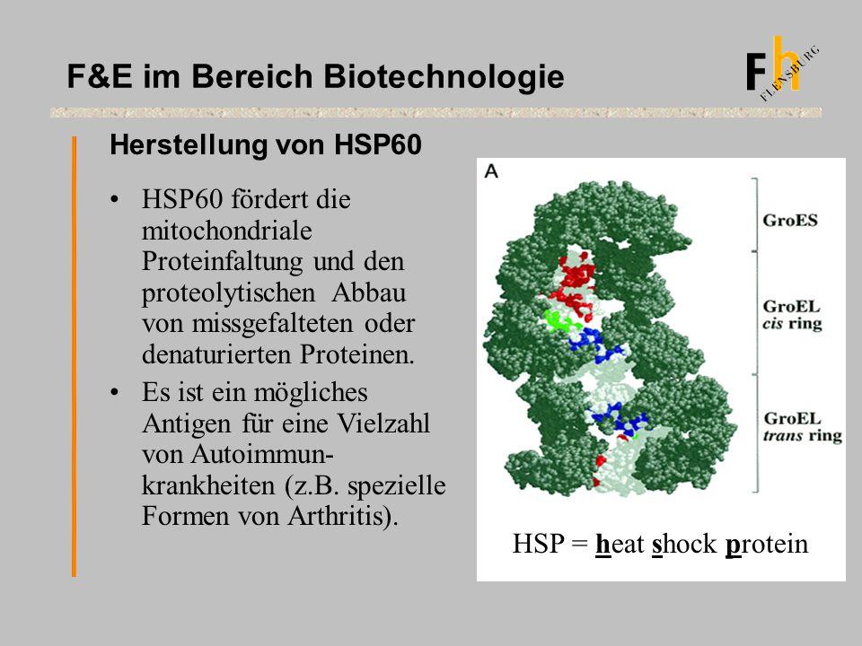 Herstellung von HSP60 F&E im Bereich Biotechnologie HSP60 fördert die mitochondriale Proteinfaltung und den proteolytischen Abbau von missgefalteten o