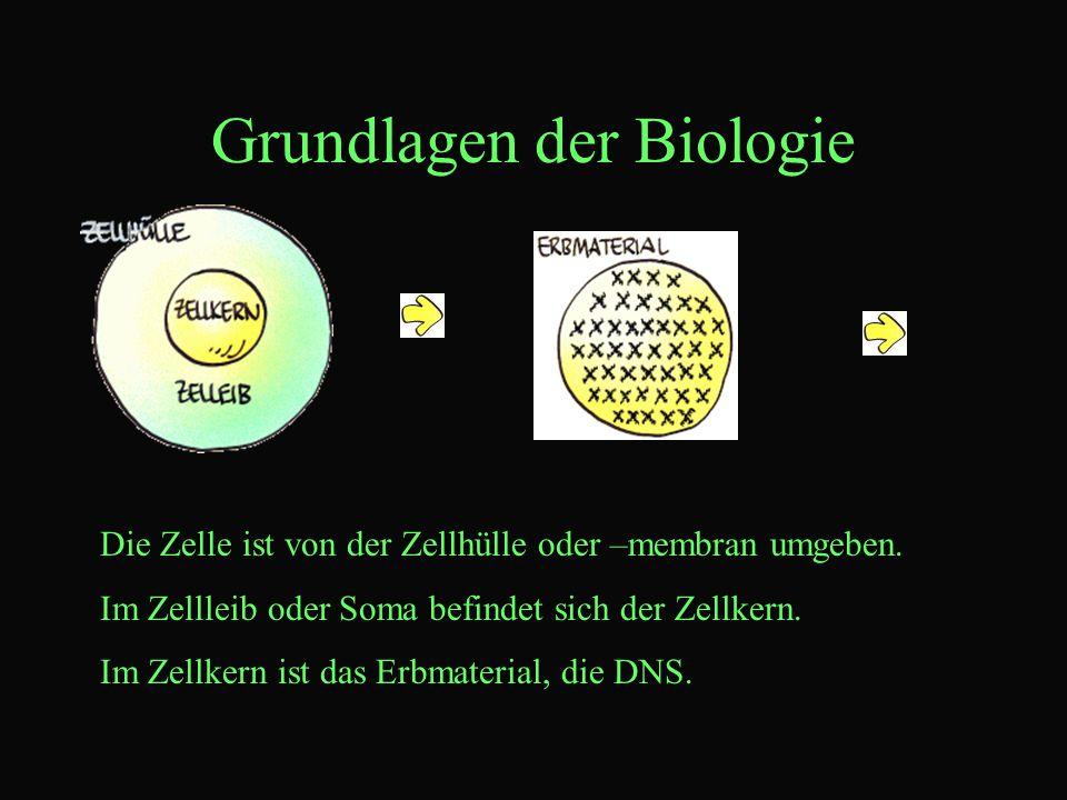 Grundlagen der Biologie Die Zelle ist von der Zellhülle oder –membran umgeben.