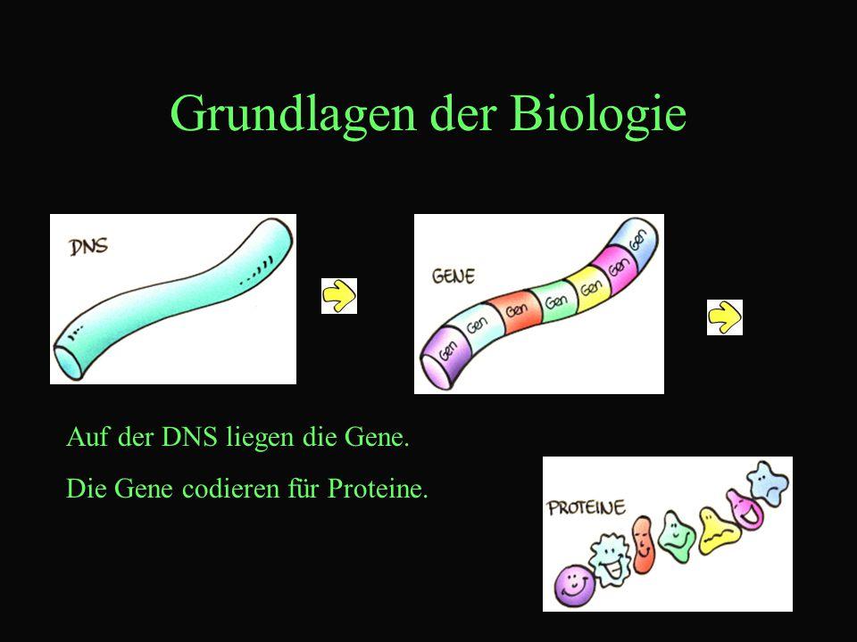 Grundlagen der Biologie Auf der DNS liegen die Gene. Die Gene codieren für Proteine.