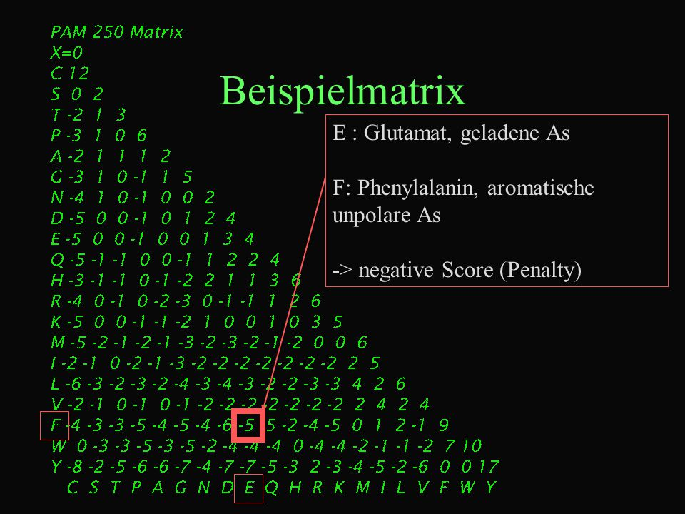Beispielmatrix E : Glutamat, geladene As F: Phenylalanin, aromatische unpolare As -> negative Score (Penalty)