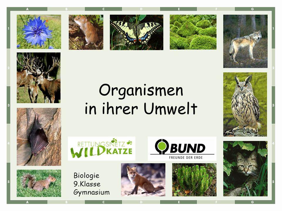 In einem Forschungsprojekt wurden die Ursachen für den Rückzug der Wildkatzen analysiert: Die Wildkatze benötigt großflächig störungsarme Waldlebensräume mit typischen Strukturen zum Verstecken und Anpirschen.