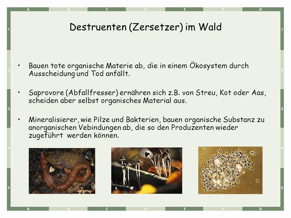 Destruenten (Zersetzer) im Wald Bauen tote organische Materie ab, die in einem Ökosystem durch Ausscheidung und Tod anfällt. Saprovore (Abfallfresser)
