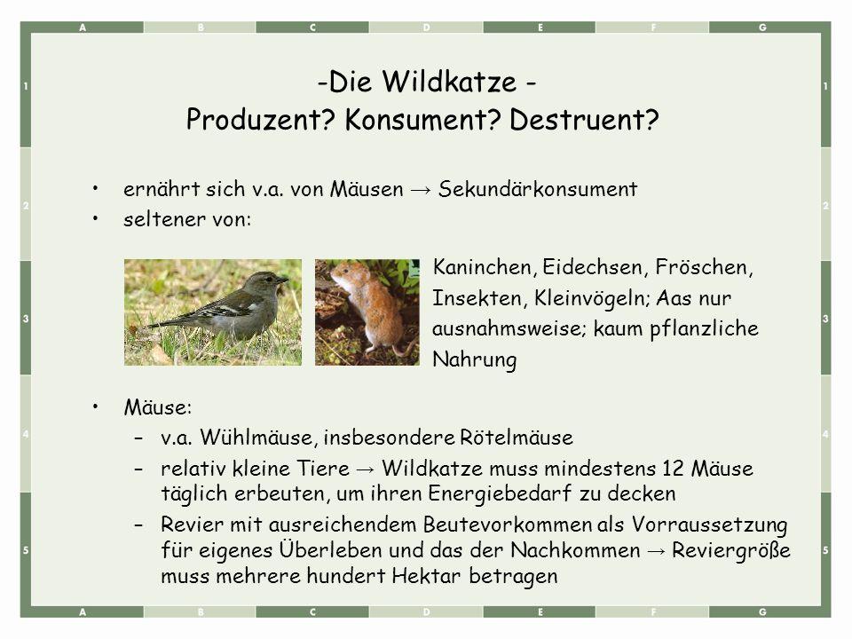 -Die Wildkatze - ernährt sich v.a. von Mäusen → Sekundärkonsument seltener von: Kaninchen, Eidechsen, Fröschen, Insekten, Kleinvögeln; Aas nur ausnahm