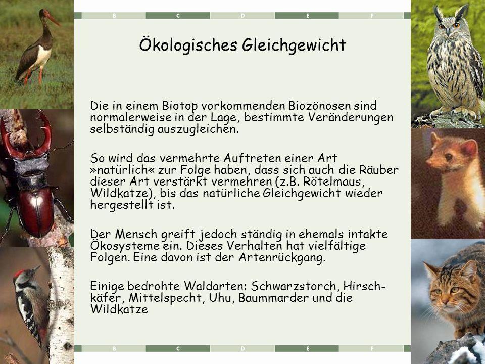 Ökologisches Gleichgewicht Die in einem Biotop vorkommenden Biozönosen sind normalerweise in der Lage, bestimmte Veränderungen selbständig auszugleichen.