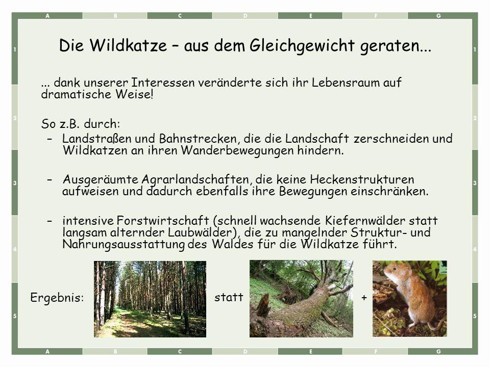 Die Wildkatze – aus dem Gleichgewicht geraten...... dank unserer Interessen veränderte sich ihr Lebensraum auf dramatische Weise! So z.B. durch: –Land