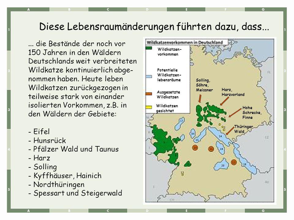 ... die Bestände der noch vor 150 Jahren in den Wäldern Deutschlands weit verbreiteten Wildkatze kontinuierlich abge- nommen haben. Heute leben Wildka