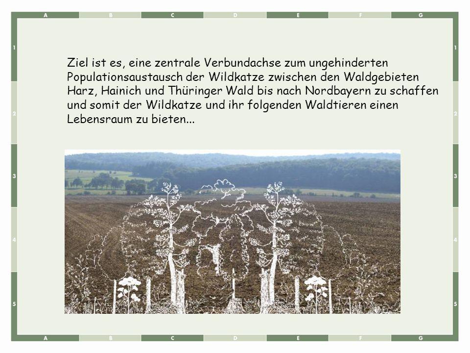 Ziel ist es, eine zentrale Verbundachse zum ungehinderten Populationsaustausch der Wildkatze zwischen den Waldgebieten Harz, Hainich und Thüringer Wal