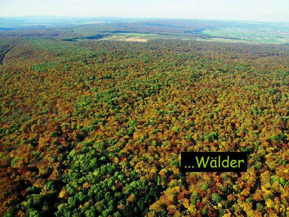 Sie gehören zu den ursprünglichsten Ökosystemen in Mitteleuropa: die deutschen Laubmischwälder.
