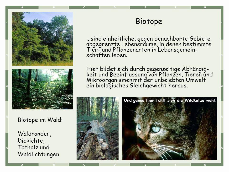 Biotope...sind einheitliche, gegen benachbarte Gebiete abgegrenzte Lebensräume, in denen bestimmte Tier- und Pflanzenarten in Lebensgemein- schaften leben.