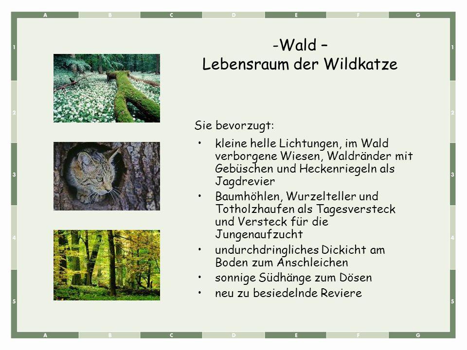 kleine helle Lichtungen, im Wald verborgene Wiesen, Waldränder mit Gebüschen und Heckenriegeln als Jagdrevier Baumhöhlen, Wurzelteller und Totholzhaufen als Tagesversteck und Versteck für die Jungenaufzucht undurchdringliches Dickicht am Boden zum Anschleichen sonnige Südhänge zum Dösen neu zu besiedelnde Reviere Sie bevorzugt: -Wald – Lebensraum der Wildkatze