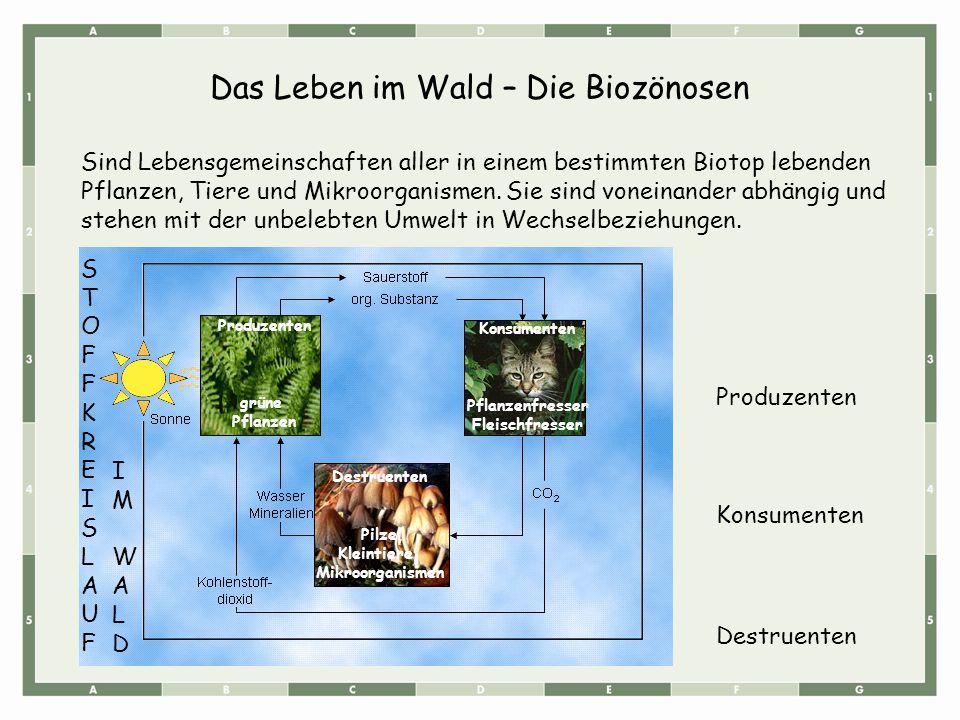 Das Leben im Wald – Die Biozönosen Sind Lebensgemeinschaften aller in einem bestimmten Biotop lebenden Pflanzen, Tiere und Mikroorganismen. Sie sind v