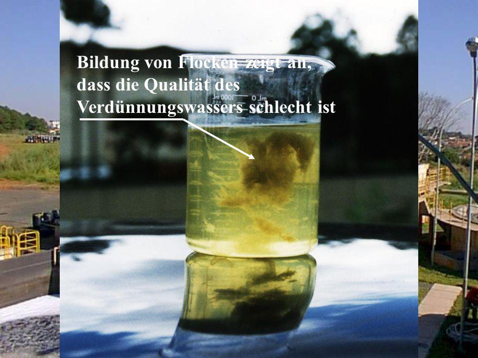 Bildung von Flocken zeigt an, dass die Qualität des Verdünnungswassers schlecht ist