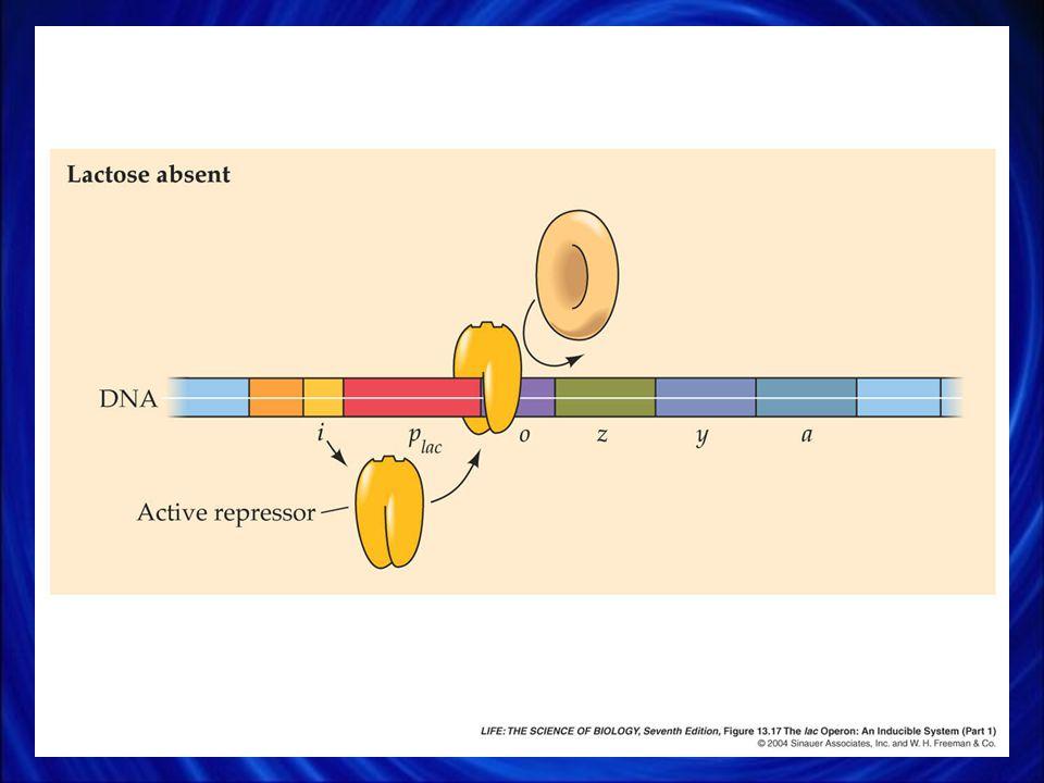 23. Januar 2006 Enzymregulation / Enzymhemmung