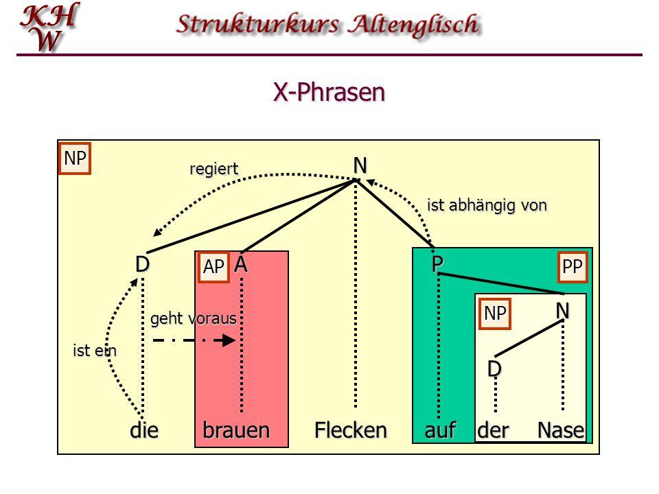 NP AP PP NP X-Phrasen N N DAP D diebrauenFleckenaufderNase regiert ist ein geht voraus ist abhängig von