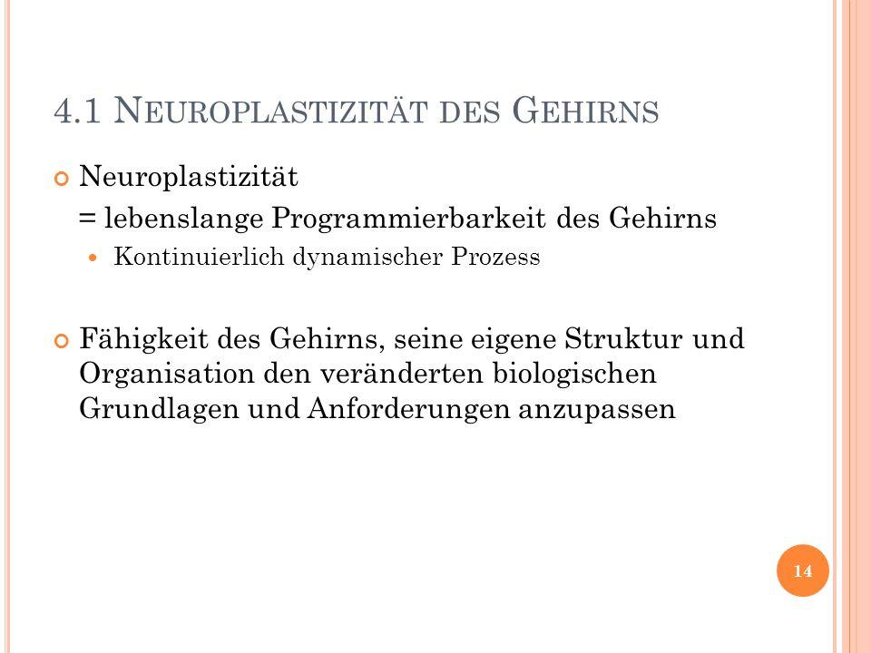 4.1 N EUROPLASTIZITÄT DES G EHIRNS Neuroplastizität = lebenslange Programmierbarkeit des Gehirns Kontinuierlich dynamischer Prozess Fähigkeit des Gehi