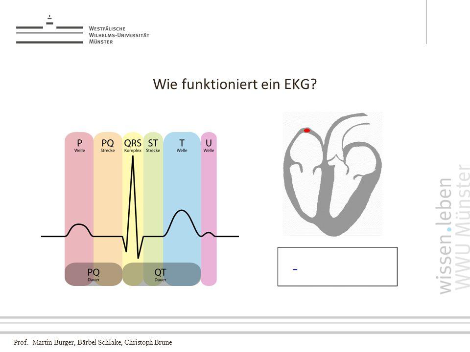 Prof. Martin Burger, Bärbel Schlake, Christoph Brune Wie funktioniert ein EKG
