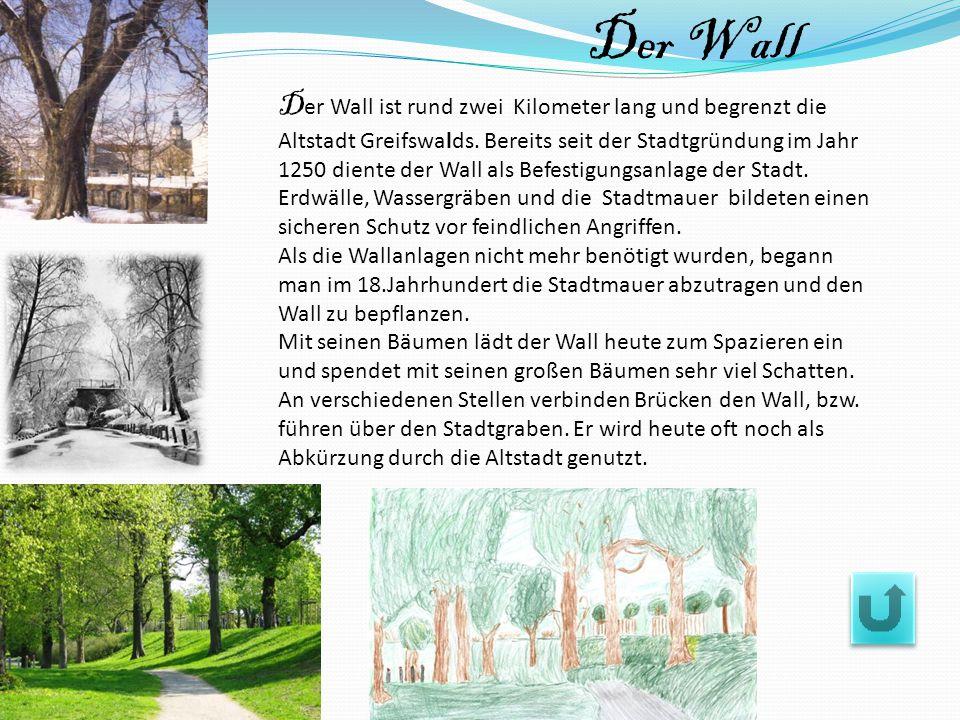D er Wall ist rund zwei Kilometer lang und begrenzt die Altstadt Greifswalds. Bereits seit der Stadtgründung im Jahr 1250 diente der Wall als Befestig